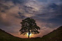 7th. Place - Sunset Sycamore Gap - by Ray Grace